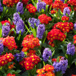 Vibrant flowerbeds — Stock Photo