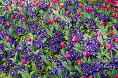 Vibrant flowerbeds — Stock Photo