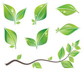 Green leaves set — Stock Vector