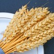 Dried wheat — Stock Photo