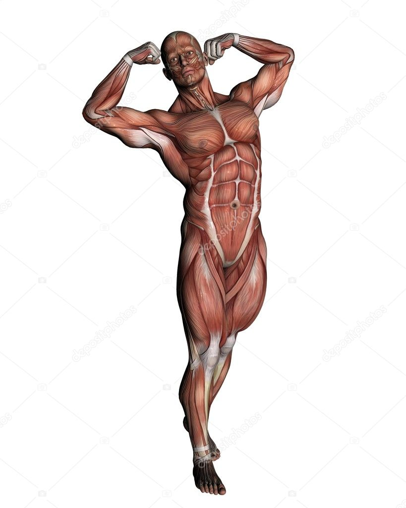 A male human anatomy — Stock Photo #10628038
