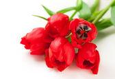 červené tulipány — Stock fotografie