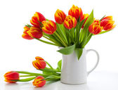 Red tulips on white background — Stock Photo