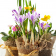 Colorful spring flowers — Stock Photo #8358869