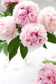 Beautiful pink peony — Stock Photo