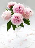 The pink peony es hermoso — Foto de Stock