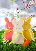 Paskalya tavşanı kurabiye — Stok fotoğraf