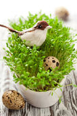 Birds and eggs on the cress — Stock Photo