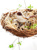 Birds and eggs in an Easter nest — Stock Photo