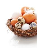 白い背景の上の巣の卵 — ストック写真