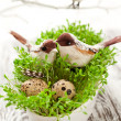 Birds and eggs on the  cress — Foto Stock