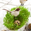 Birds and eggs on the  cress - Stockfoto