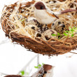 Birds and eggs in an Easter nest - Stockfoto