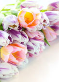 Easter eggs and tulips — Stockfoto