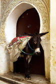 Donkey in Old Medina, Marocco — Stock Photo