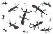 Nastavit tropické gecko — Stock fotografie