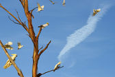 Dead Eucalyptus And Lively Birds — Stock Photo