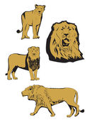 Asiatic lion illustration — Stock Vector