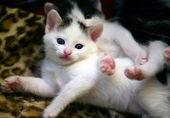 Beautiful white kitten — Stock Photo