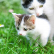 Stock Photo: Mother cat and kitten on morning walk