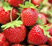 Freshness strawberries closeup — Stock Photo