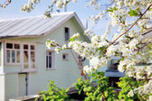 House in the spring blossom garden — Stock Photo