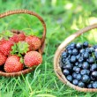 Two baskets - strawberries and blueberries — Stock Photo