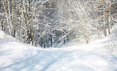 April snow forest — Stock Photo
