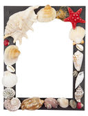 Frame with shells on a white background — Stockfoto
