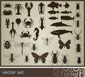 Vector set — Stock Photo