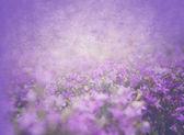 グランジ花柄のテクスチャ — ストック写真