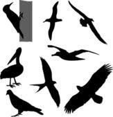 Birds silhouettes - vector — Stock Vector