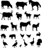 Farm animals collection - vector — Stock Vector