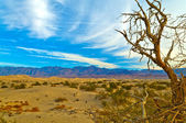 Death valley — Stockfoto