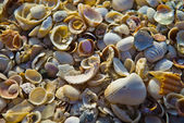 Seashell Pattern — Stock Photo