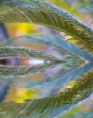 Palm leaves reflection — Stock Photo