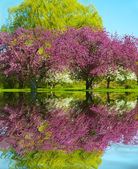 Spring Reflection — Stock Photo