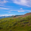 Yellowstone Landscape — Stock Photo