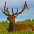 Male elk with large antlers - Foto Stock