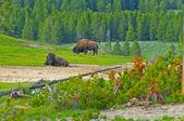 Spectacular Yellowstone Landscape — Stock Photo