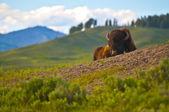 Yellowstone Landscape — Stock Photo