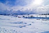 Winter Yellowstone Landscape — Stock Photo