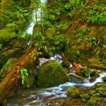 Rainforest Waterfall — Stock Photo #9787446