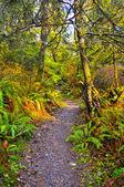 Rainforest Trail — Stock Photo