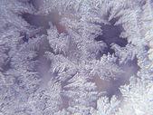 Ice flowers — Stock Photo