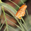Butterfly — Stock Photo #10525230