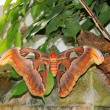 Butterfly — Stock Photo #10525247