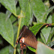 Butterfly — Stock Photo #10525258