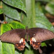 Butterfly — Stock Photo #10525304