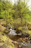 Mountain stream in Glen Lyon — Stock Photo